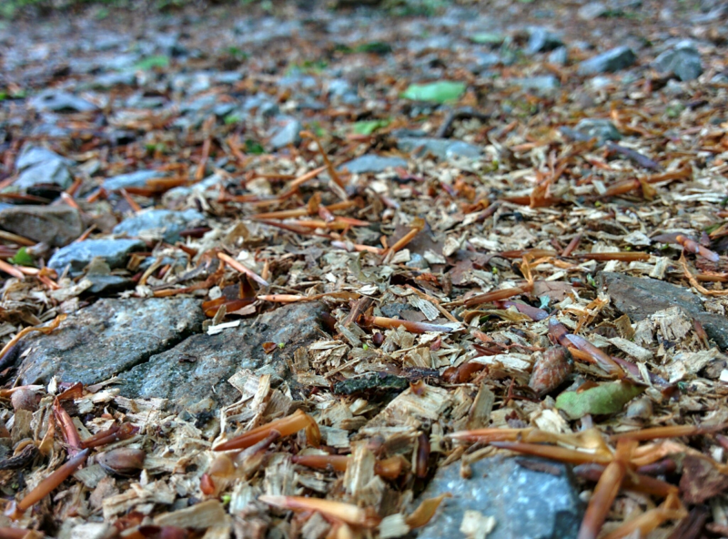 File:Forest floor on Lichtscheid.webp
