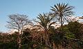 Forest in San Juan Bautista.jpg