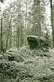 Forest of the Karelian isthmus.jpg
