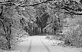 Forest road Slavne 2017 BW G9.jpg