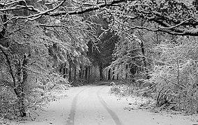 Forest road Slavne 2017 BW G9.jpg