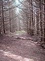 Forestry glade at Bryn Du - geograph.org.uk - 1107382.jpg
