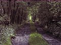 Former railway line at Stowe-by-Chartley, Staffordshire.jpg