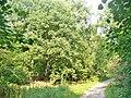 Forst Grunewald - Waldweg (Grunewald Forest - Woodland Path) - geo.hlipp.de - 41398.jpg