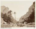 Fotografi på El Kantara, Algeriet - Hallwylska museet - 107934.tif