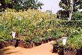 France Loir-et-Cher Festival jardins Chaumont-sur-Loire 2003 Nature aprivoisee 01.jpg