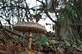 Fungi and lichen (15508934519).jpg