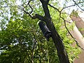Funny temporary infrastructure, Crombie Park, 2013 08 21 (6).JPG
