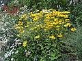 Garden on Fyfield Road, Shelley (geograph 5508428).jpg