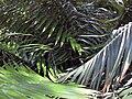 Gardenology-IMG 5070 hunt10mar.jpg