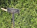 Gardenology.org-IMG 3869 hunt0904.jpg