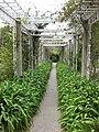 Gardenology.org-IMG 5340 hunt0904.jpg