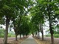 Gedenkstätte Esterwegen - P1030835.JPG