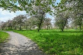 Gehölzgarten-Ripshorst-Frühling-2021.jpg