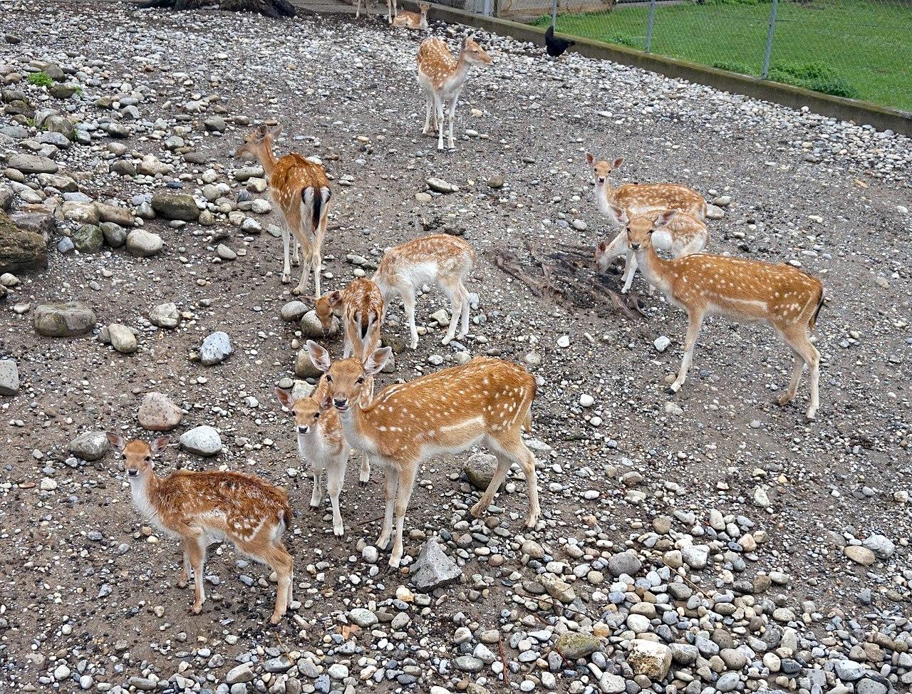 Filegeneva botanical garden animalsjpg wikimedia commons for Garden animals