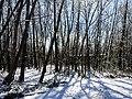 Georgia snow IMG 4909 (25076204988).jpg