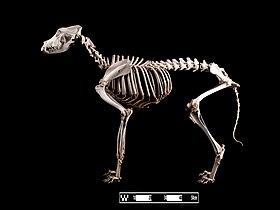 Verbazingwekkend Duitse herder - German Shepherd - qwe.wiki JM-61