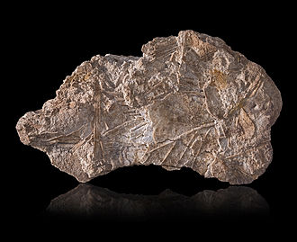 Geyserite - Geyserite from Iceland