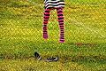 Girl In Stripes On Chainlink Fence (4098364312).jpg