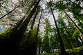 Glendalough woods II.jpg