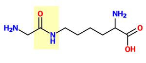 Ubiquitin - Glycine and lysine linked by an isopeptide bond. The isopeptide bond is highlighted yellow.