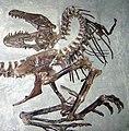 Gorgosaurus death pose.jpg
