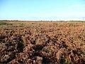 Gower moorland - geograph.org.uk - 1045043.jpg
