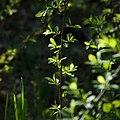 Grünzeugs Mit Sonne (33232987).jpeg