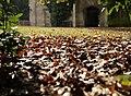 Grand Parc - Bordeaux (8012199304).jpg
