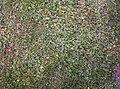 Grasfläche.jpg