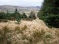 Grassy area near Cerrig y Cledd. - geograph.org.uk - 317995.jpg