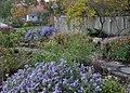 Green Spring Gardens in November (22373087548).jpg