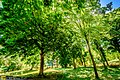 Green Trees Of Summer (147321433).jpeg