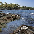 Green turtle at Black Sand Beach.jpg