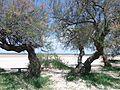Gujan Mestras - plages de La Hume - 2016 avr06.jpg