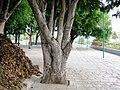 HAZRATH SYED SHAH VALI ULLA DARGAH ( THOPPUR DARGAH ) - panoramio.jpg