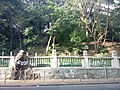 HKU 港大 near 香港島 半山區 Mid-Levels 般咸道 Bonham Road 老榕樹 old banyan trees May 2018 LGM 04.jpg