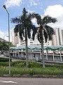 HK 城巴 619 CityBus 遊車河 tour view 觀塘區 Kwun Tong District 康寧道 Hong Ning Road 協和街 Hip Wo Street June 2020 SS2 17.jpg