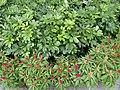 HK TKL 調景嶺 Tiu Keng Leng 香港知專設計學院 HKDI 李惠利工業學院 LWL campus June 2018 LGM 14 green trees n plants 03.jpg