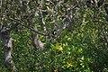 Halcyon smyrnensis 09257.jpg