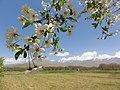 Hamadan Province, Do Rudan, Unnamed Road, Iran - panoramio (5).jpg