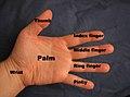 Hand parts.jpg