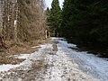 Harz near Bodebruch 13.jpg
