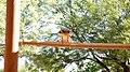 Hawk - panoramio (2).jpg