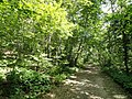 Hemlock Gorge (Charles River Reservation) - DSC09452.JPG