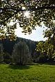 Herbstsonne.JPG