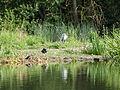 Heron (14400889313).jpg