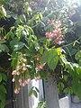 Hi sunshine on flowers.jpg