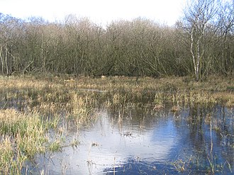 Broad Fen, Dilham - Image: High water levels in Broad Fen, Dilham, Norfolk geograph.org.uk 319595