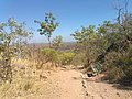 Hiking Trail with Bench, Edith Falls, Nitmiluk National Park, Katherine, Northern Territory, Australia, during Dry Season.jpg